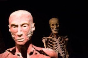 Body worlds. Foto: Simon Berg
